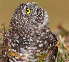 Scanning The Sky/ Burrowing Owl by naturalnomad