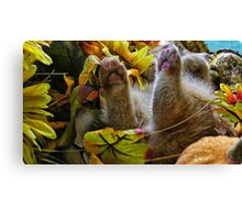 Di Milo ~ Belly up ~ Fall Kitten Canvas Print