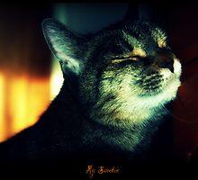 My Sweetie by jodi payne