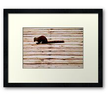Stripes: Red-tailed mongoose Framed Print