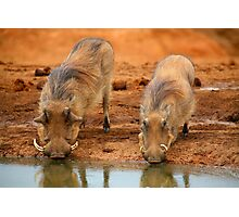 Warthogs At Waterhole Photographic Print