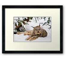 Yet more Yeti! Framed Print