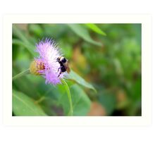 Busy Bumble Bee Art Print