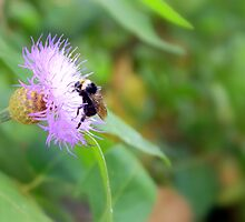 Busy Bumble Bee by tirrera