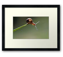 it's the end of the line buddy Framed Print