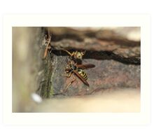 Wasp In The Rock Crevice Art Print