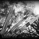 Three leaves by pnjmcc