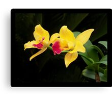 Burana Beauty Orchid - Symbol of Perfection Canvas Print