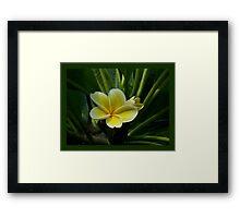 Lemon Drop Frangipani - Essence Framed Print