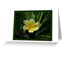 Lemon Drop Frangipani - Essence Greeting Card