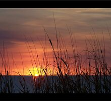 Sunset Harvest by jono johnson