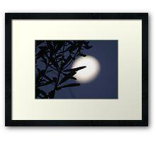Moonlighting Framed Print