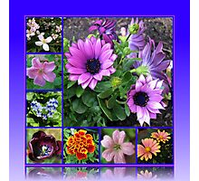 Singing of Summer - Floral Collage Photographic Print