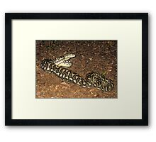 Brisbane Floods 2011- Wildlife - Taken By Surprise Framed Print