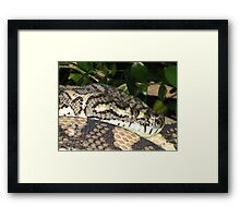 Brisbane Floods 2011- Wildlife - Relocation Day Framed Print