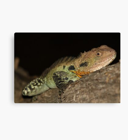 Gippsland Water Dragon Canvas Print