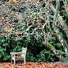 Sit & Watch the Seasons Change - Mt Wilson NSW by Bev Woodman