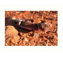Thick-tailed Gecko Art Print