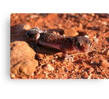 Thick-tailed Gecko Canvas Print