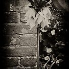 ORANGE FLOWER by scarletjames