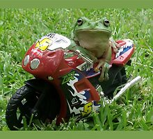 Stop Frog by jono johnson