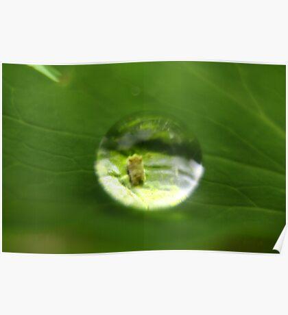 Macro water drop Poster