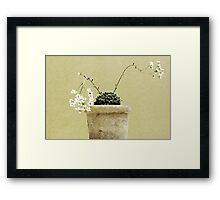 Pastel in the Garden Framed Print