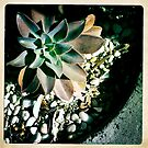 Autumn Succulent by Marita