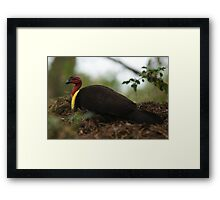 Brush Turkey Framed Print