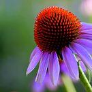 Purple Flower by mhm710