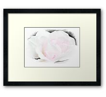 Summer's Rose © Framed Print