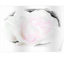 Summer's Rose © Poster