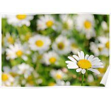 Happy Daisy  Poster