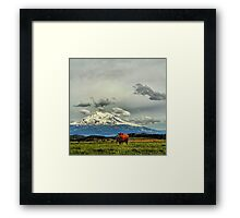 California Cows Framed Print