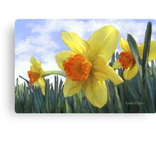 Sunlight on the Daffodils Canvas Print