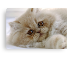 You had me at 'meow'  Canvas Print
