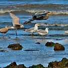 SHORELINE BIRDS by Sandy Stewart