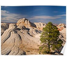 Lone Tree at White Pocket, Arizona Poster