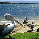 Pelicans on the beach by Eileen O'Rourke