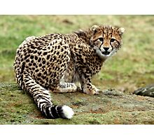 Cheetah cub with attitude Photographic Print
