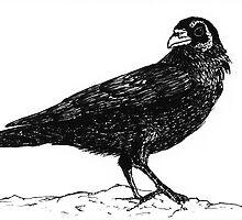 Raven II by Matthew Chamberlain-Keen