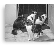 What Are You Guys Looking At?? Canvas Print
