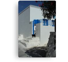 black cat at front of a white house in santorini Canvas Print