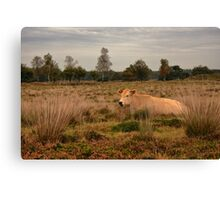 Its a Cow Canvas Print