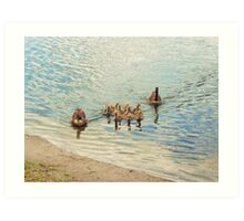 Nine baby geese in The Villages, Florida Art Print