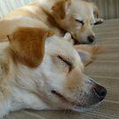 Sleepy sleepers :D by KanaShow
