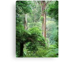Forest in the Dandenong Ranges Canvas Print