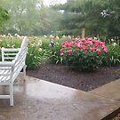 Rain In The Garden by Jane Jenkins