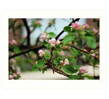 Spring me a Blossom Bloom 1 Art Print