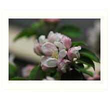 Spring me a Blossom Bloom 2 Art Print